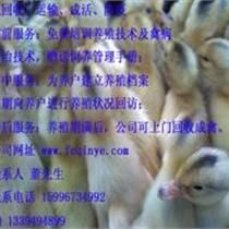 浙江鵝苗價格|鵝苗批發價格