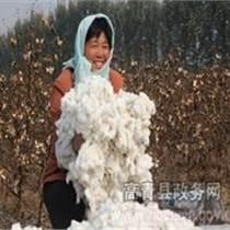 山东周红灯棉花采摘机 新疆我爱发明采棉机 棉花采摘机