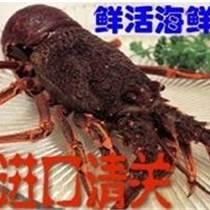 廣州海鮮進口,馬達加斯加,美國,澳洲龍蝦進口清關
