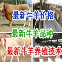 2014年的景德鎮肉牛養殖前景在哪買?v肉牛市場價格