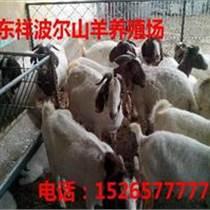 阿里改則縣肉羊養殖技術1526
