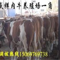 廊坊哪里有养牛场,在什么地方