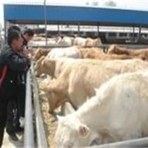 湖北省種羊出售,肉羊,種羊價格