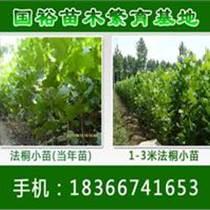 山東法桐直銷永州18公分速生法桐