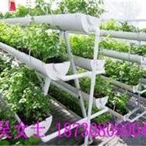 无土栽培架/立体式种植槽/草莓栽培架最好的