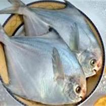 批发顶级鲳鱼