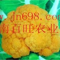 黃色花菜種子