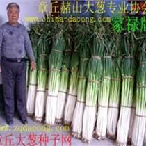 山東大蔥種子 家祿三號大蔥種子