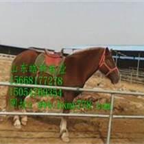 肉馬圖片棗紅色馬成年馬多少錢