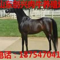 養馬場,養馬價格,蒙古馬價格