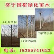 12公分法桐树价格一年冠