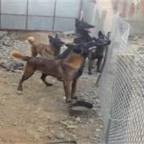 内蒙古通辽什么地方有卖马犬