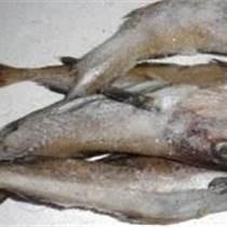 冷冻海鳗鱼