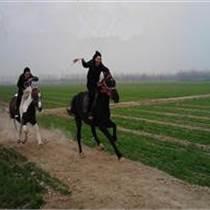 骑乘马价格,骑乘马多少钱