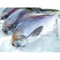 冷冻多宝鱼 金线鱼 九节虾
