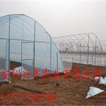 辉县蔬菜大棚工程建造案例