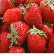 草莓苗今年低价出售,草莓图片