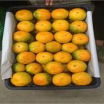 專業代銷代賣柑橘