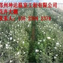 河南鄭州坤達專業建造蔬菜大棚