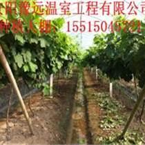 安陽溫室蔬菜大棚骨架材料批發