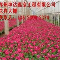 坤達鍍鋅鋼管花卉大棚建造