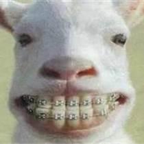 矯正牙齒疼不疼?