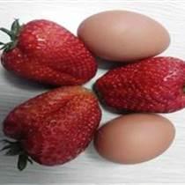 草莓抗病新品種太空2008