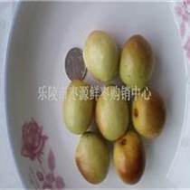 最近山東鮮棗產地價格報價