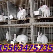 长毛兔养殖场