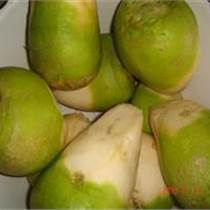 供應笨辣疙瘩種子山東芥菜種子