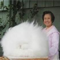 ┠ 泰州新西蘭比利時雜交野兔Ψ