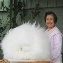 ┠ 德州新西蘭比利時雜交野兔Ψ