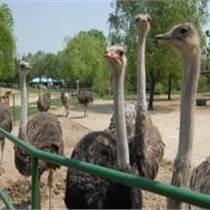 珍禽养殖基地