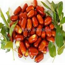 鮮長紅棗產地專業供應商