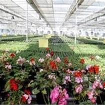 洛阳薄膜温室建造花卉大棚造价