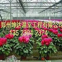 種植花卉拱棚建造簡易大棚報價
