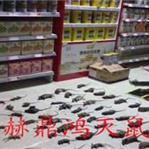 柳州赫鼎鸿专业灭鼠公司
