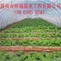 朔料蔬菜大棚鋼管蔬菜大棚建造