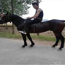 哪里有骑乘马销售