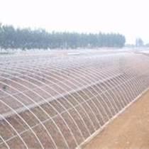 溫室建造找業內龍頭祥瑞農業公司