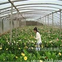 鄭州祥瑞專業建造花卉溫室大棚