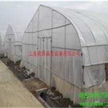 草莓大棚安裝 河南溫室大棚銷售