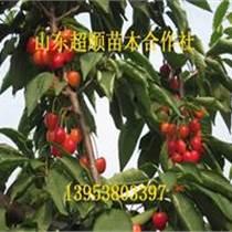 岱紅櫻桃種苗