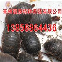 菏澤土元養殖回收價格