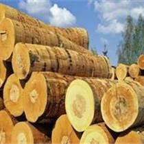 青島圣佳特專業木材進口清關服務