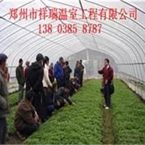 鄭州溫室大棚建造蔬菜大棚安裝