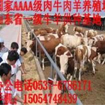 贵州西门塔尔牛价格