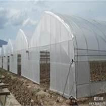 保定連棟溫室大棚建造報價