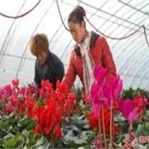 鄭州專業建造花卉無立柱大棚