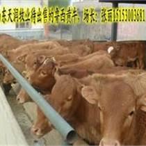 溫州什么地方賣肉牛崽